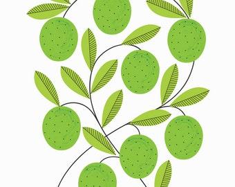 A3 Limes Print