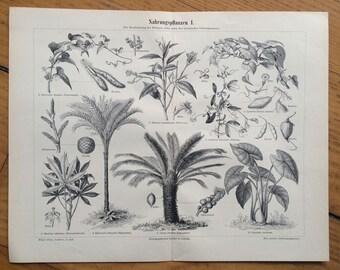 1894 tropical palm tree print original antique botanical palms evergreen lithograph tropic fruit - nahrungspflanzen I