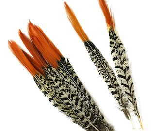 Decorative Lady amherst pheasant feathers for sale! (50 pieces)