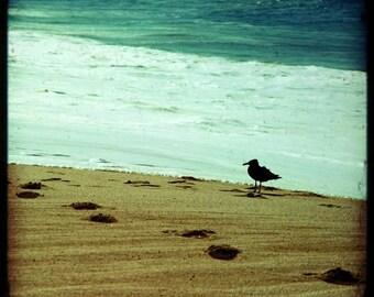 BB/ beach photography (footprints in the sand calm dreamy beach sea foam green ocean seabird Mexico travel photo print wall art home decor)
