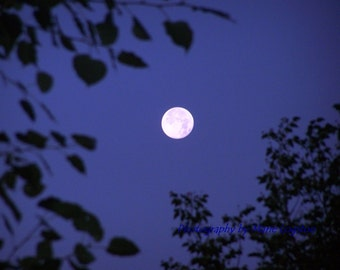 Full Moon Photography/Leaves /Silhouette /Night Sky