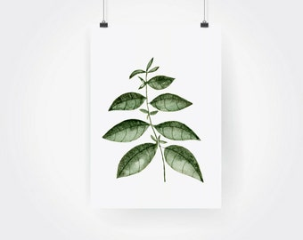 Hand Painted Watercolor Basil Herb Print