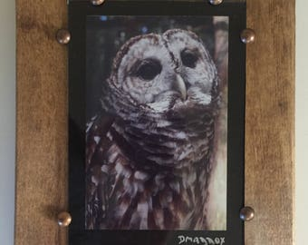 Barred Owl Framed Wall Art