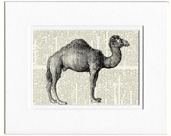 camel dictionary page print