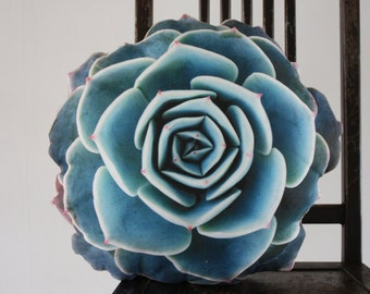 Spring Succulent pillow made to order (nature photography)