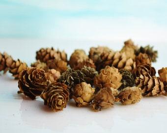 Miniature Pine Cones ~ Terrarium Accessory ~ Decorate your Terrarium or Miniature Garden with these cute pine cones - Crafting supply