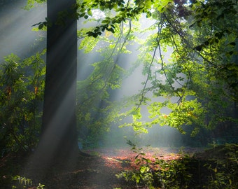 Forest Sunlight by Christopher Mills - Limited Edition A3 Fine Art Giclee Mounted Print | Nature Photography Landscapes/Trees/Woods/Forests