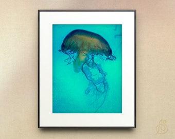 Teal Blue Jellyfish art print - jellyfish wall art - teal blue jellyfish photograph - jellyfish decor - sea life art