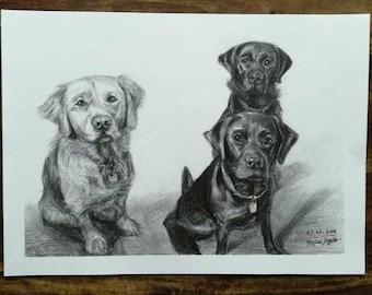 Custom Pets sketch portrait