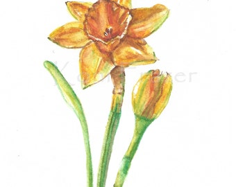 Daffodil watercolor painting / ten most interesting flower series / Original watercolor / flower painting 5 x 7