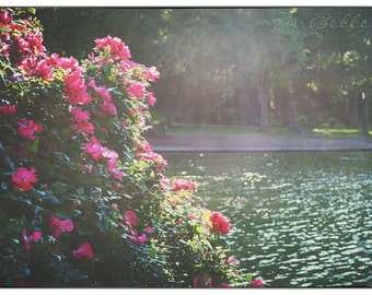 Naturfotografie - Lakeside Rosen - 10 x 14 Fine Art print - rote Rosen Lake Cottage Wand Kunst Wohnkultur