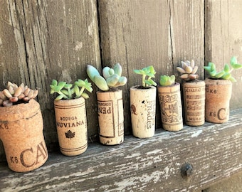 Succulent planter, modern cork plant pot, small planter, cork plant pot, planter flower pot, succulent party favors, cute plant pot small