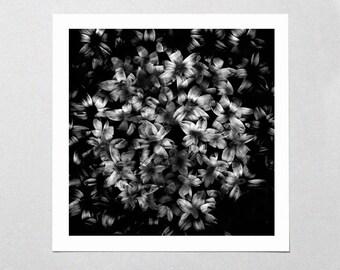 Fine Art Giclée Print - Twilight Blossoms - Floral - Flowers - Black & White - Photographic Print