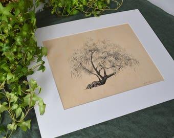Tree Drawing on Wood Veneer - Pen and Ink Fine Art Print - 11x14 - Conquistador Oak Savannah, Georgia - Tree Art - Nature Art Print