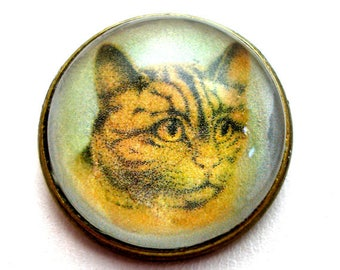 "Tabby cat, domed glass studio button, 3/4"", 22mm. handmade."