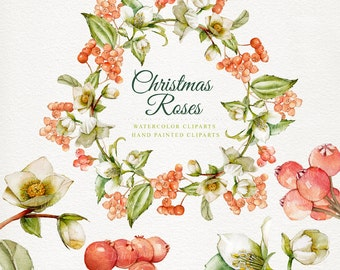 Christmas roses, christmas watercolor, watercolor clipart's, hand painted 5 clipart's without background, 5 png files - 300 dpi