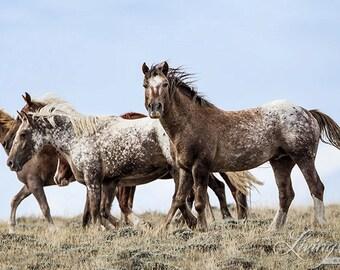 Bronze Warrior and His Family - Fine Art  Horse Photograph - Wild Horse - Adobe Appys - Adobe Town - Fine Art Print