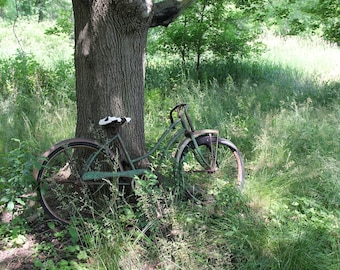 Old Bike Against Tree Photograph