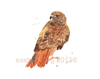 Hawk art, 8x10 print, Red Tailed Hawk Print, watercolor birds, birds of prey, gift for him