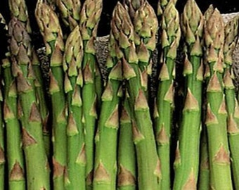 Mary Washington Asparagus Heirloom Garden Seed Non-GMO 25+ Seeds Marvelously Productive  Best Open Pollinated Gardening