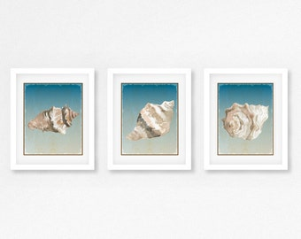 3 FRAMED And MATTED SEASHELL Prints - Free Shipping -  Black Or  White Frames - Available In 4 Sizes - Mix And Match - Create a Gallery Wall
