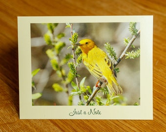 Set of 10 Yellow Warbler Note Cards, Yellow Bird Note Cards, Folded Note Cards, Blank Note Cards, Bird Photo Note Cards, Bird Photography