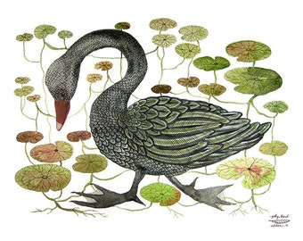 GROßE Black Swan und Seerose Moor drucken, Schwan-Illustration, Vogelkunst, Giclée Druck, Aquarell Druck, Wandkunst, 13 x 19