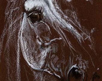 grau, Pferd Porträt, Pferde Kunst, Arabisches Pferd, Original Öl-Pastell Zeichnung