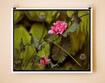 POPPY GRACE - Signed Fine Art Photograph 8x10
