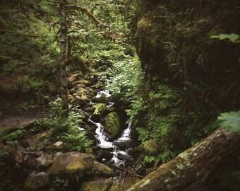 Magical Forest Photo // Photo Art Print // river, oregon, fangorn, pacific northwest, columbia gorge, eagle creek, temperate rainforest