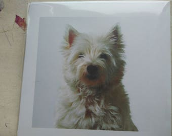 West Highland Terrier Greetings card