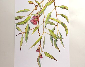 A3 Eucalyptus with red flowers wall art; botanical print A3;  gum tree branch print; Australian plant decor; nature gift for home