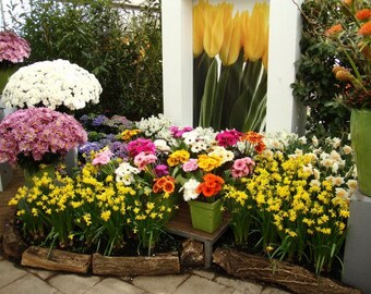 Digital download, flower photo, printable photograph, flower decoration, instant download, nature photography, flower arrangement