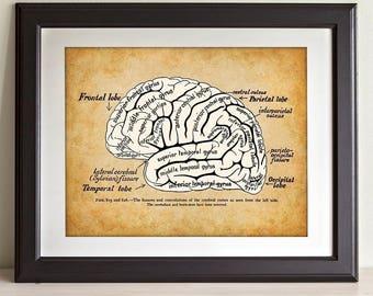 Brain - 11x14 Unframed Art Print - Great Gift for Medical, Nursing Students, Doctors or Nurses
