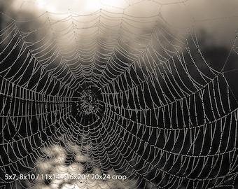 Backlit Spider Web with Dew Sunrise Color