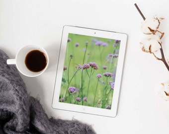 Soft Dreamy Violet Purple Flowers in Field Nature Photograph Digital Download