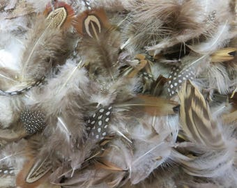 feather nature assortment