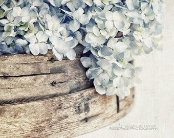 Farmhouse Wall Decor, Neutral Art, Light Blue Flower Photography, Rustic Country Decor | 'Faded Denim No. 2' - Aged Page Series