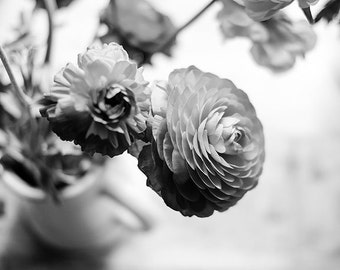 Black and White Ranunculus Photo Art, Ranunculus, Floral Art, Black and White, Ranunculus Photography, Gallery Wall Art, Office Wall Art