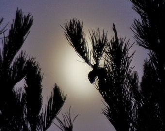 Misty Moon & Pine Tree, misty moon photograph, violet sky, tree silhouette, mystical christmas print, yule image, winter solstice