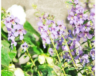 Spring Purple Art