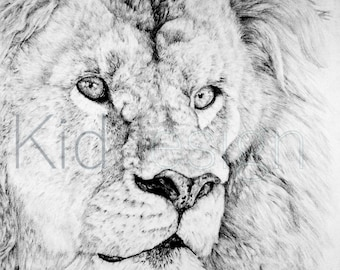Lion Drawing - 8x12 Framed Print