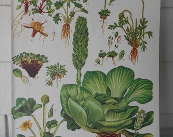 """Botanical, Original 9X12"""" Book Page (Plate #1) from """"Wild Flowers of the World"""""""