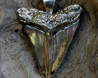 Sterling Silver Shark Tooth Pendant W12
