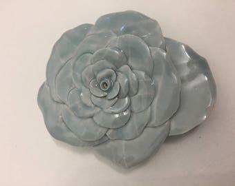 Baby Blue Rose 2