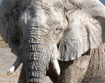 Elephant Wisdom portrait - signed photo print, size 8x10 inches (20x25cm) - wild animal in Africa