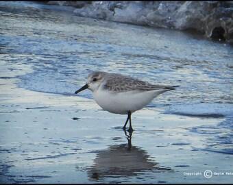 Blue Ocean Shore Bird Photograph--Beach Stroll 3--Fine Art