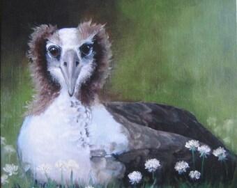 Albatross oil Painting Canvas Print Fledgling Sea bird Hawaii New Zealand Soft Clover