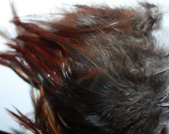 Chicken Feathers - Natural - Beautiful