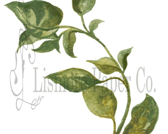 Instant Download Botanical, Basil Herb, Printable Art, Instant Wall Art, Graphic Kitchen Art, Craft, Digital Download, Botanical Wall Art